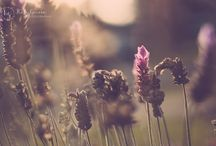 Photography - Landscapes & Nature