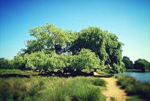 Danny & Liv's Tree