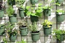 verdures vitrines