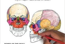 Anatomy & Nursing Study Tools / Books, coloring pages, websites, and other resources for studying for Anatomy & Physiology and nursing school.