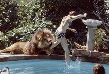 Löwe als Haustier