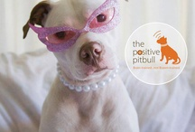 PIT BULL Love / Pitbulls are beautiful, gentle, silly, loyal, & loving.