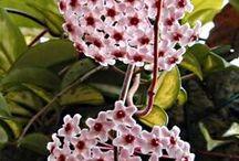 TROPICAL PLANTS FLOWERS