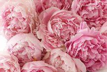 Flori, fiori, flowers...