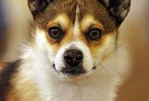 Animals-Dogs / Dogs / by Ellary Branden