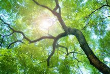 Why Thermowood / Why Thermowood? Because #ecological #durable #harmless #healty #no chemical #sustainable