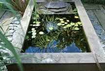 pond/water feature