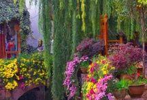 trädgård, natur
