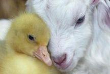 Babytiere