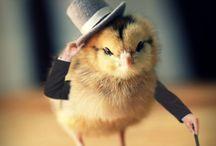 Gentrified Chicken