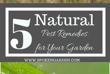 Garden Pests and Diseases / Various ways to deter, kill, combat garden pests and diseases.