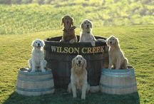 Dogs + Wine Country
