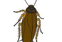 exterminar insetos