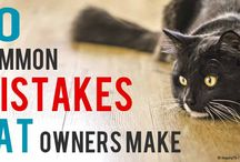 mistakes cat owners make