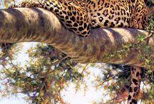 J er for Jaguar