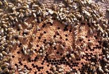 Vass Méhészet