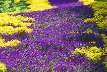 Foto Gallery Blumen Pflanzen Wälder / Wunderschöne Naturfotos, teilweise auch von mir fotografiert. www.kuechencottage.de Küchencottage - Non Food Ecke - Hobbyfotografie
