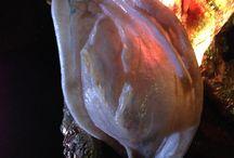 Light luce scultura illuminante / Opera d'arte lampadario applique unica fantastica idea