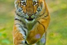 Bellos animales