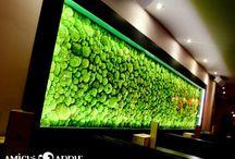 Green Walls - Lighting