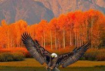 Birds of Life