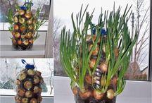 Jak rozmnožit zeleninu - ovoce
