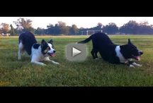 Dee-O-Gee / Dog\Dog training.  / by Shona Rutt