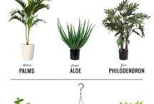 rośliny - ciekawostki