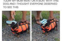 Leuke honden