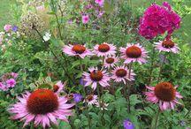 Sunnys Garten