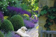 Garden makeover ideas / We got rid of our lawn in our back yard and turned it into a patio garden, it's a work in progress and I love to find Pinteresting ideas and inspiration! Enjoy / by Sidney Cook