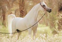 horses / by Samantha Johnson