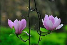 Per Olsen malet blomster 2