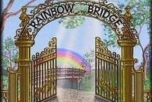 Rainbow Bridge / by Cockapoo Place