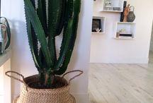Plantes vertes