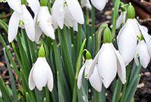 Beautiful Bulbs / http://dabbiesgardenideas.com