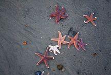 Tatuajes De Estrellas De Mar