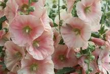Inspiration fleurs !