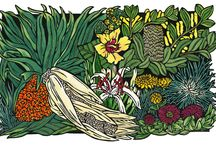'Wildflowers' Exhibition / Northern Rivers Community Gallery, Ballina  27th November - 22nd December 2013   LimitedEditionHandcoloured Linocuts by Lynette Weir   All images © copyright Lynette Weir & may not be reproduced without permission  – image use/licensing inquiries contact Lynette Weir.  http://lynette weir.com  http://soulsongart.com/2013/11/19/new-exhibition-northern-rivers-community-gallery-ballina/
