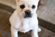 Dog Breeds that interest me / by Darla Porter