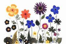 Crafts - Pressed flowers
