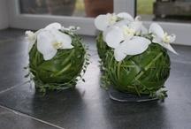Orchidea - art - decor