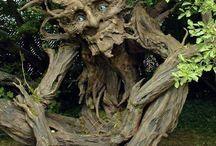 ent - arbres