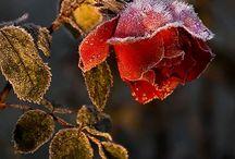 flowers / by Anya Kharpunen