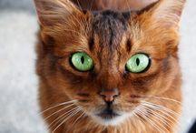 Cat  / Gatos y felinos