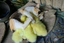 cute animals / by Susi Hupi