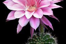 cactus & more passion..