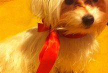 Hermes my lovely dog