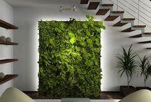 Zelené steny