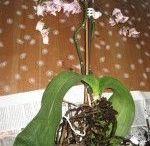 Květiny doma*